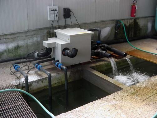 gold-fish-italia-impianto-filtrazione (2)