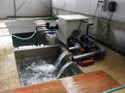 gold-fish-italia-impianto-filtrazione (5)