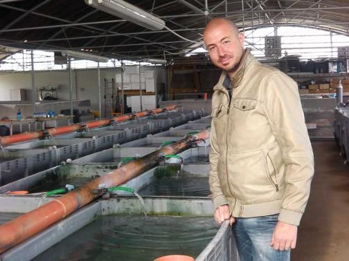 gold-fish-italia-showroom (7)